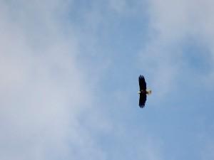 EagleBlog10