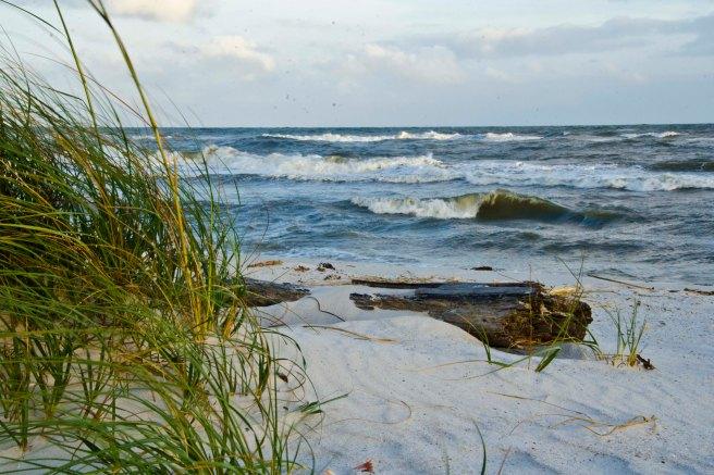 BeachNature016