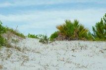 BeachNature017